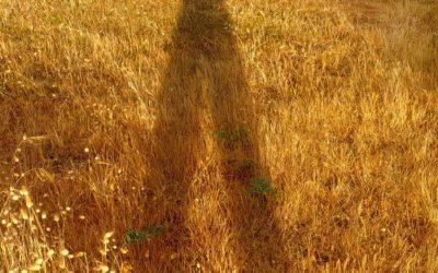 Fred* ou l'art de l'esprit paysan 2.0 : être et savoir.